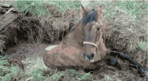 caballo_pozo